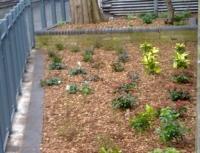 New Plants behind Goldthorpe