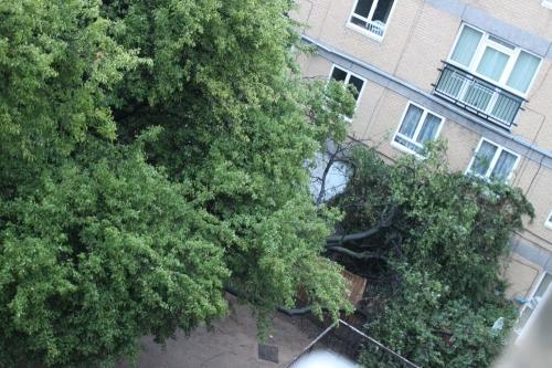 Fallen Tree 06-06-2011